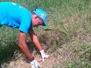 Voluntario sembrando árbol