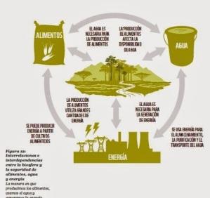 Ciclo alimento, agua y energía