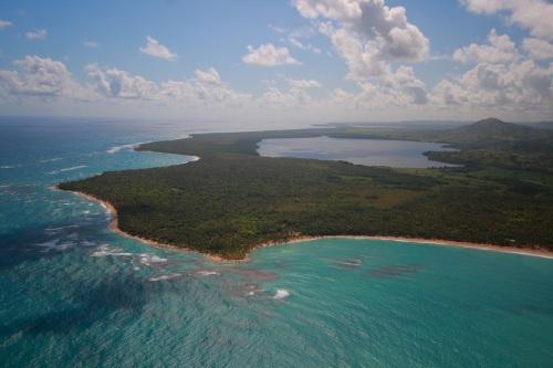Tropicalia 1