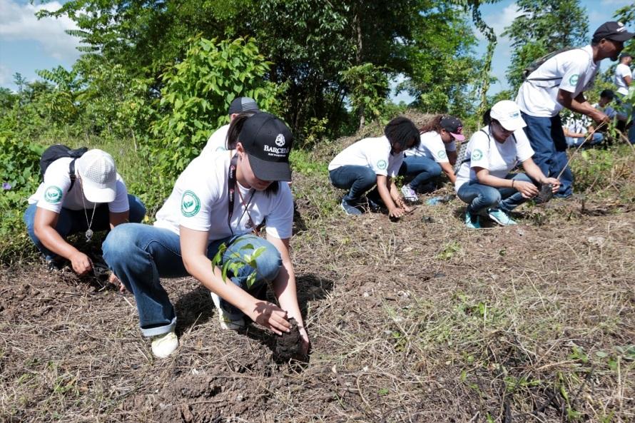 Colaboradores de Ron Barceló durante jornada de resforestación